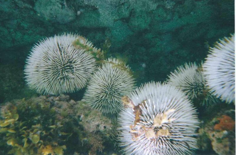 The spines of sea urchins inspired researchers to engineer more resilient building materials.