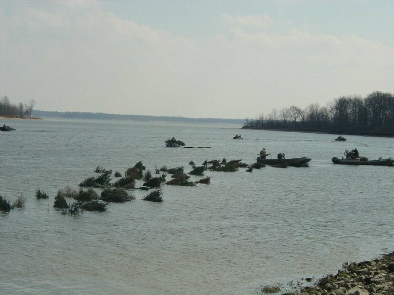 Trees float in Carlyle Lake, on their way to becoming artificial reefs.