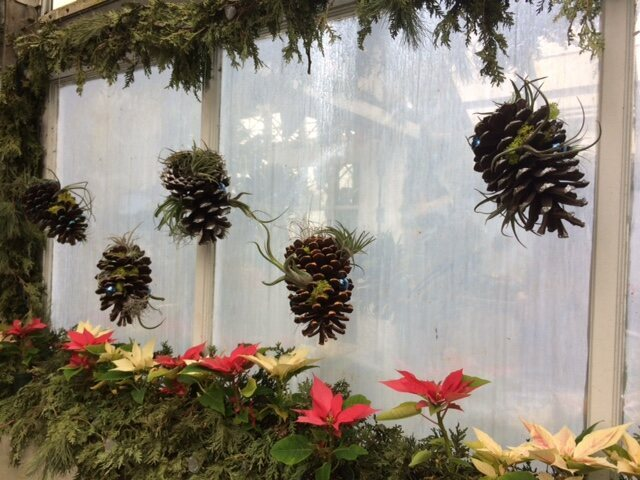 Poinsettias and pinecones pop up everywhere in the flower show.