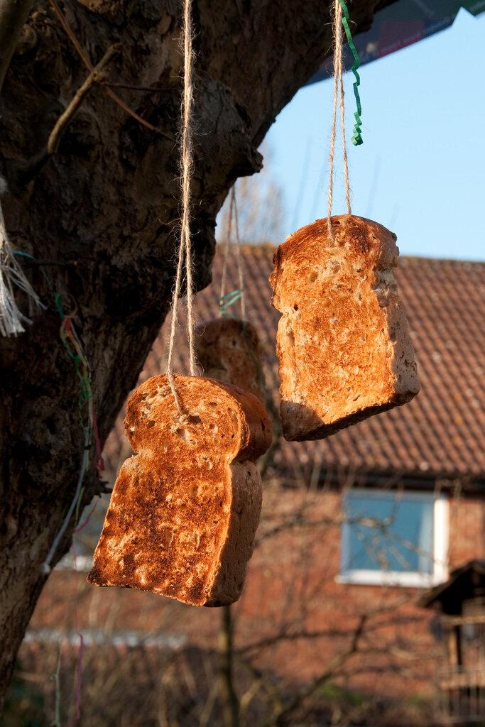 Toast swinging from an apple tree.
