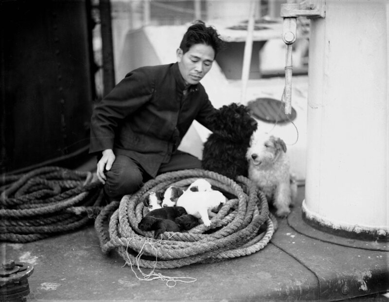 A seaman on Japanese cargo ship <em>Yahiko Maru</em> with a litter of puppies.