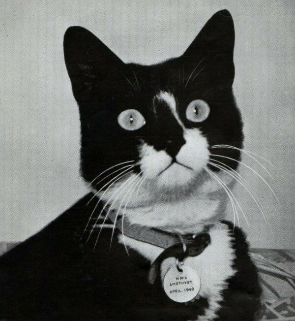 Simon Was The First Decorated Cat In British Military History