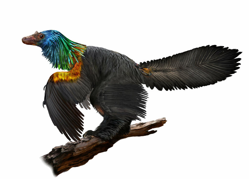 Chinese 'rainbow dinosaur' had iridescent feathers like hummingbirds