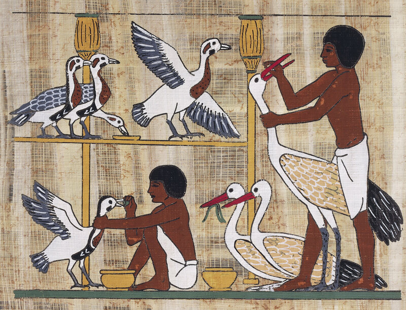 A papyrus depiction of geese-feeding from Dynasty V.