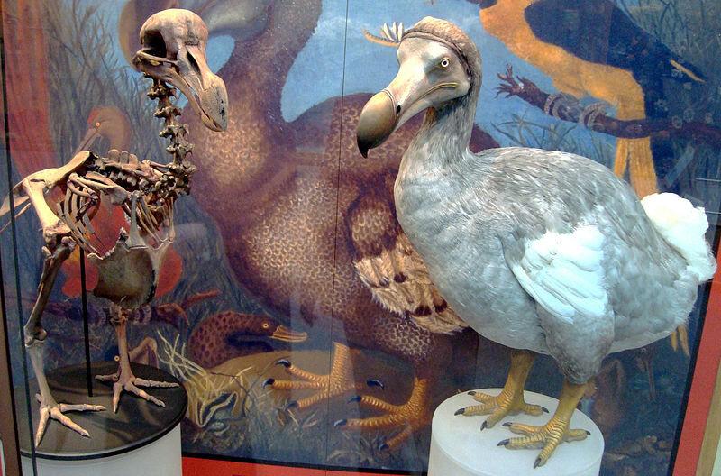 dodo - Atlas Obscura