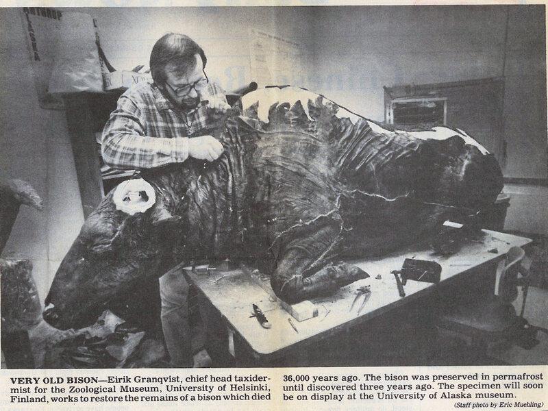 Eirik Granqvist working on the taxidermy of Blue Babe.