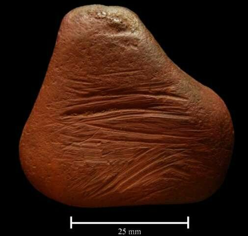 The striated surface on this ochre pebble suggests it was scraped to produce a pigment powder.