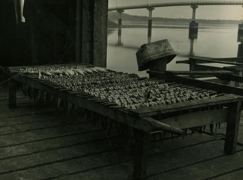 Herring out to dry at McCurdy's Smokehouse, circa 1964.