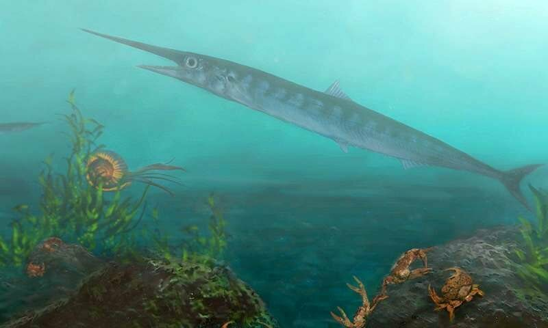 An artist's rendition of the newly identified <em>Candelarhynchus padillai</em>.