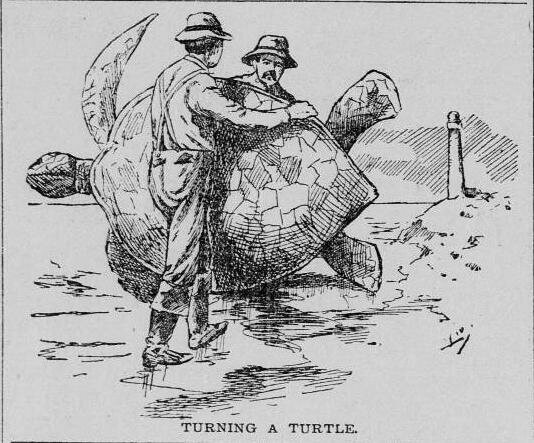 "Two men ""turn a turtle,"" in what was once considered a ""sport."""