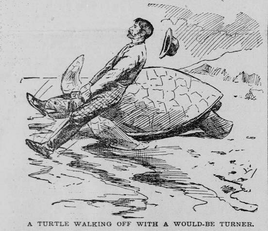A man wrangles a turtle in an 1894 illustration.