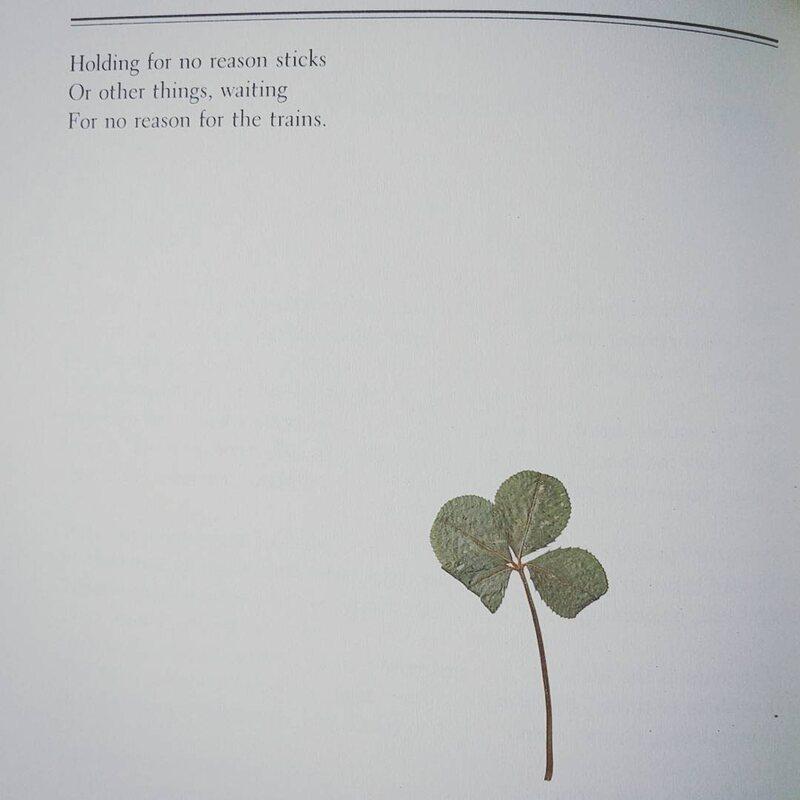 A very good four-leaf clover.