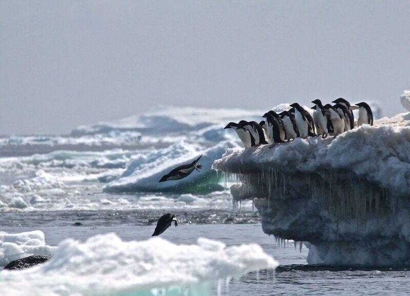 Drones helped discover a supercolony of 1.5 million Adélie penguins