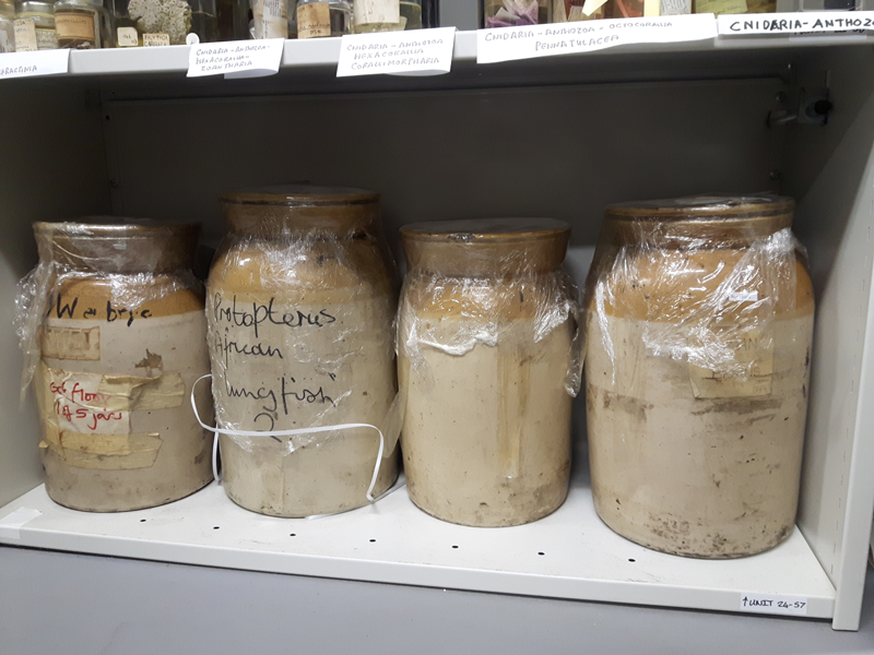 English versions of stoneware specimen jars at the Grant Museum of Zoology, University College London.