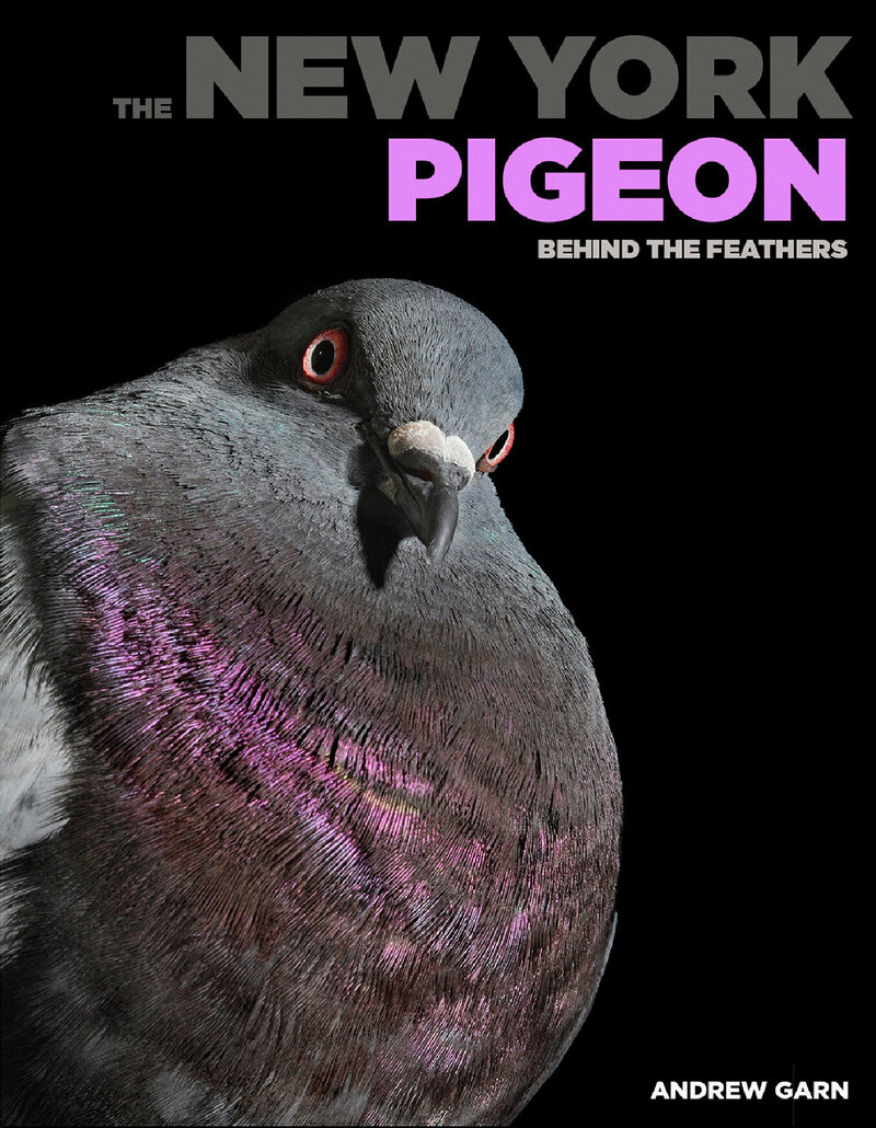 <em>The New York Pigeon: Behind the Feathers</em>, featuring Dr. Brown, a pigeon who was rescued by a veterinarian.