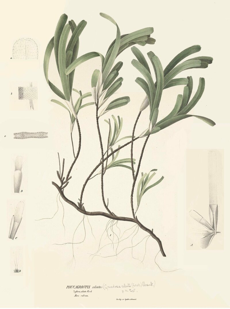 <em>Thalassodendron ciliatum</em> flourishes at Great Chagos Bank.