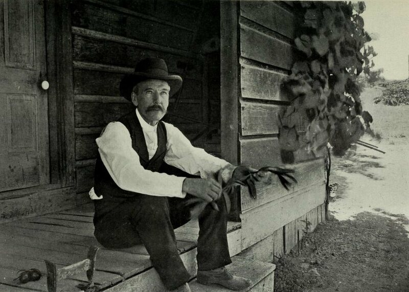 Luther Burbank, at one of his experimental farms in 1901.