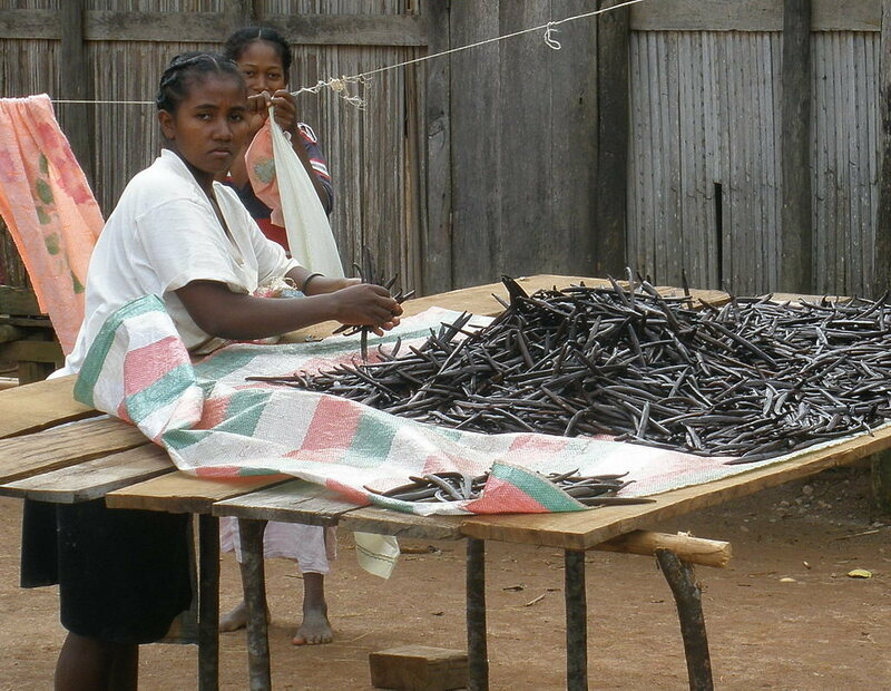 In Madagascar, cured vanilla pods are sorted for sale.