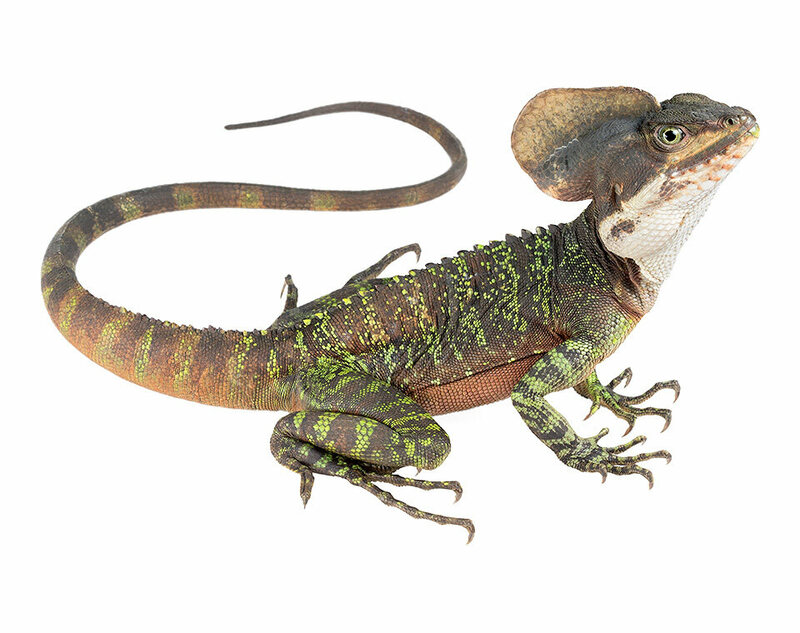 glamour shots of reptiles brought to you by science atlas obscura