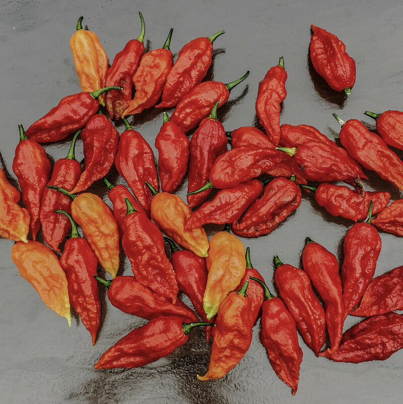 Ghost peppers, some of the hottest peppers on earth.