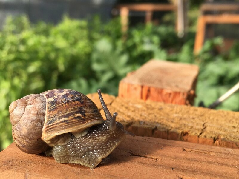 The Complicated Business of Farming Snails in America