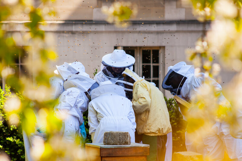 Beekeepers at the Cité Internationale Universitaire de Paris.