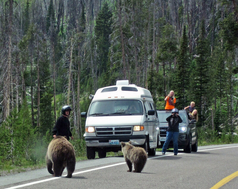 Nonconsumptive advocates, photographing grizzlies outside Yellowstone.