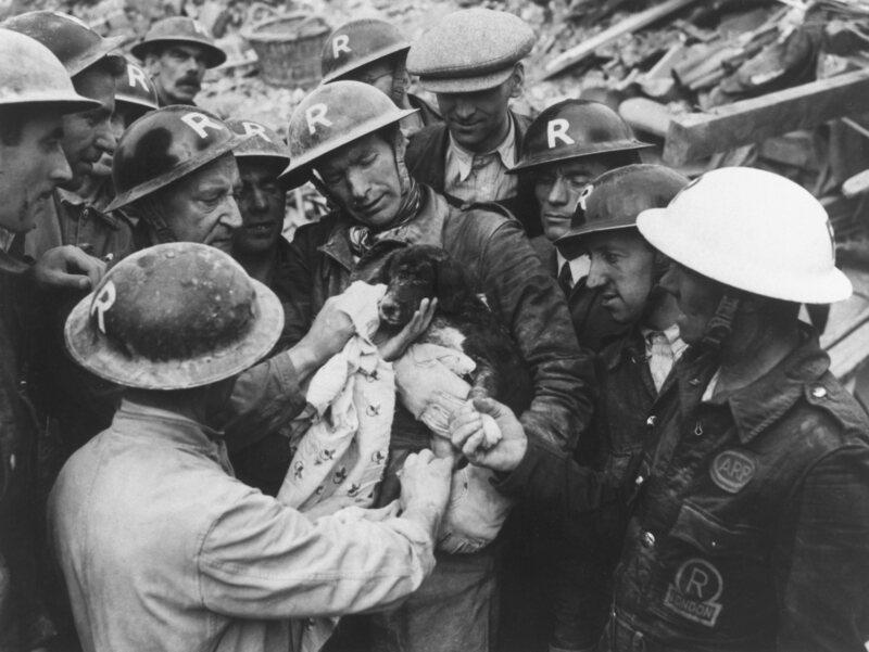 England's Forgotten Pet Massacre of 1939