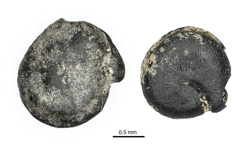 Found: Really, Really Old Quinoa