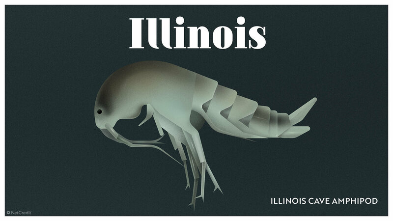 A Visual Guide to the Creatures That Could Disappear From Each U.S. State