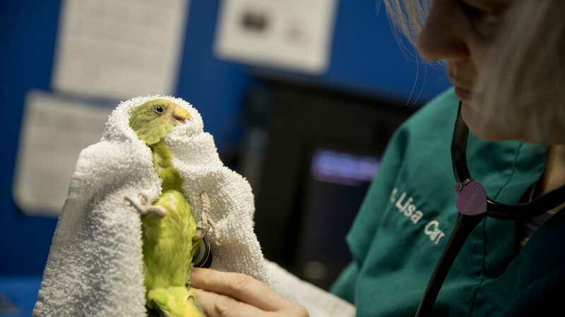 What It's Like to Care for Parrots in Washington, D C
