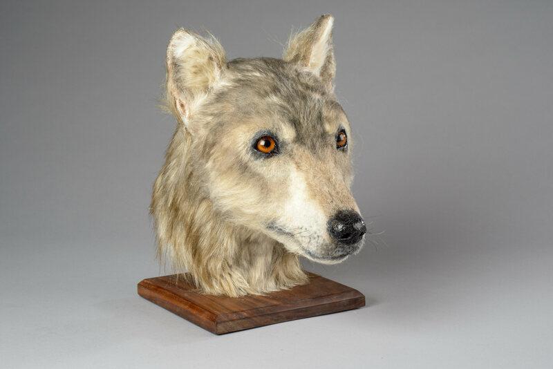 Researchers Have Recreated the Face of an Ancient Dog