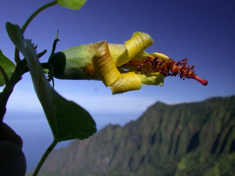 A Remote Valley, A Drone, An Extinct Flower That's Not Extinct Anymore