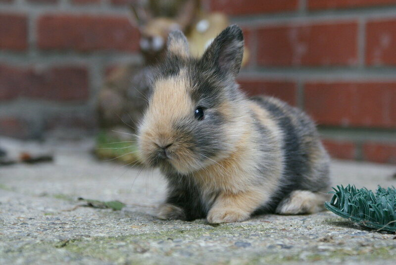 Found: Britain's First Pet Bunny