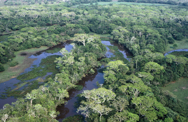 Found: One of the Oldest Burial Sites in the Amazon