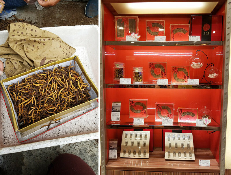 Fungus for sale at a market in Damshung, Tibet (left) and a high-end store in Chengdu, Sichuan.