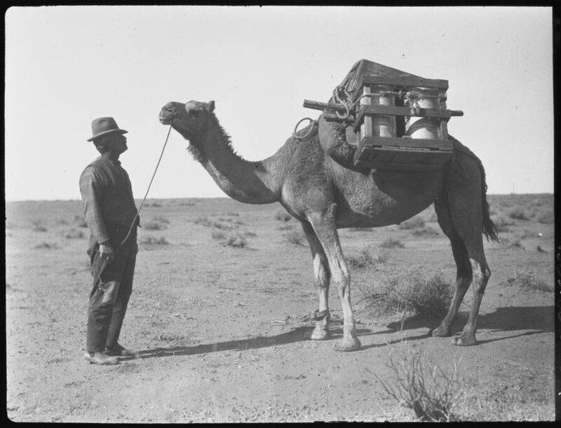 Camels to Caviar