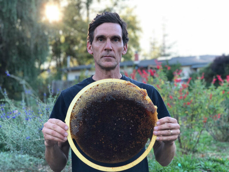 The Zen Beekeeper Returning Hives to the Wild