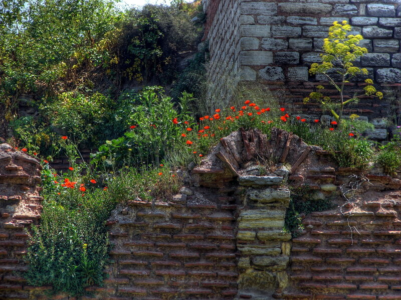 Invasive, Photogenic Plants Are Taking a Toll on Istanbul's Ancient Walls