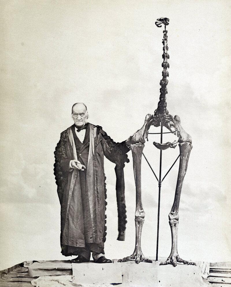 British naturalist Richard Owen poses with a moa skeleton.