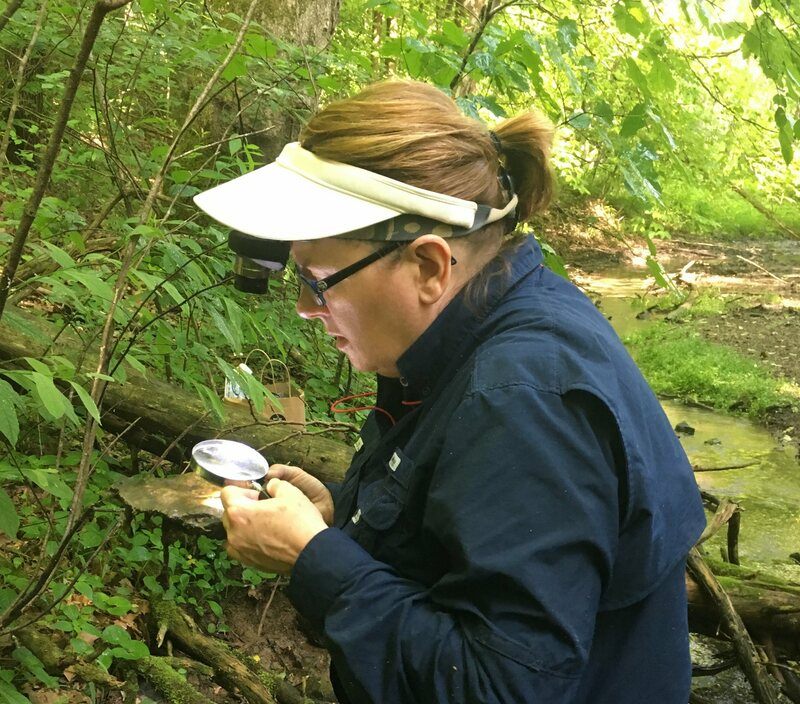 Lori Schroeder in the field, searching for small snails.