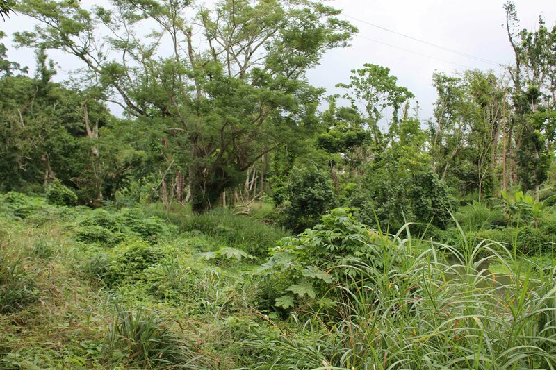 This forest near Port Vila may appear wild, but it actually contains food-producing trees and root crops likely sown by humans.