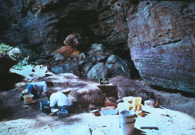 Excavations at Cold Oak Shelter in Kentucky revealed signs of intricate plant domestication in BC times.