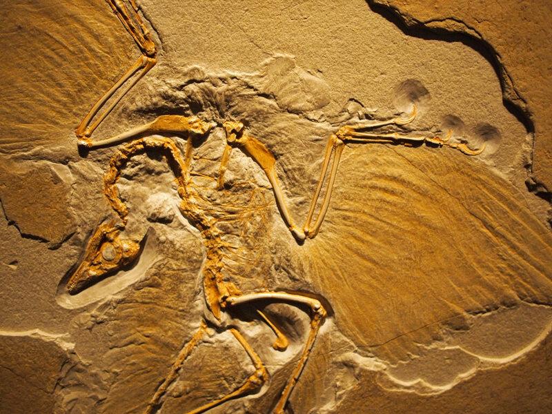 Carbon dating dinosaur fossils utah 3