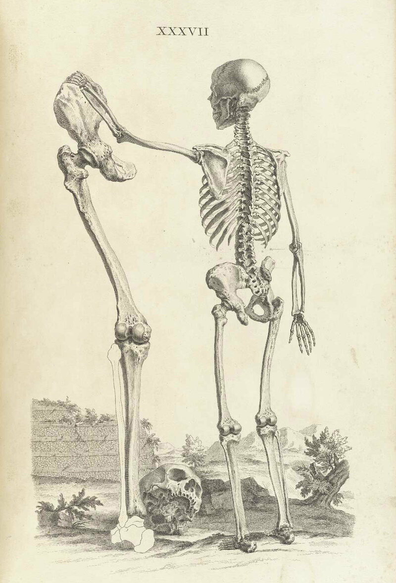 In The Good Old Days, Anatomy Drawings Were Full of Whimsy - Atlas ...