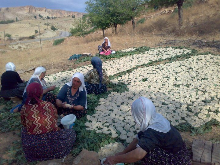Kurdish women preparing the dried dairy balls in Turkey, where they're known as kashk.