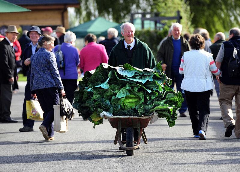 Glazebrook, in 2013, wheels along a prize-winning, 67-pound cabbage.