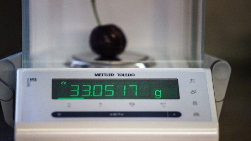 Il peso della ciliegia vincente (33 g) è misurato dalla bilancia più potente.