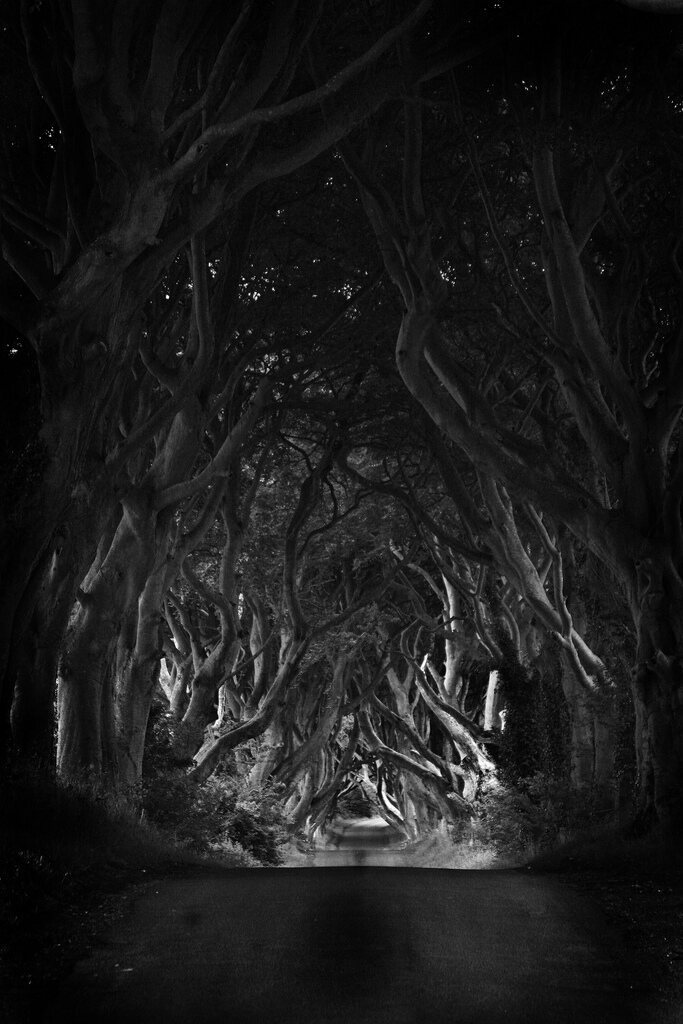 Ireland's Dark Hedges