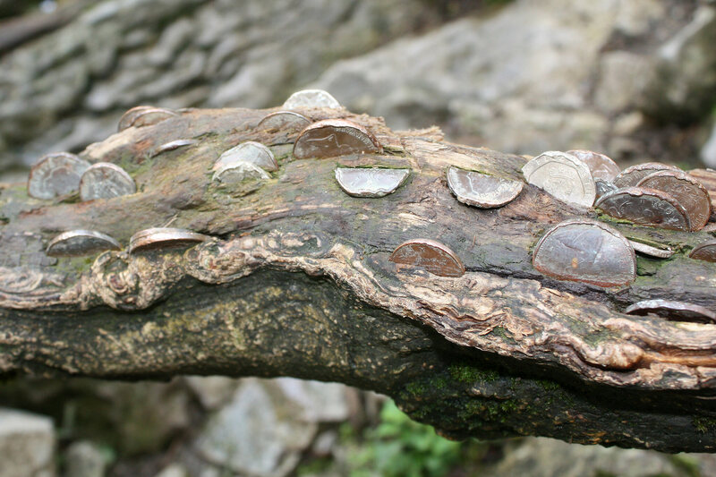 Wishing Trees: Where Money Grows in the Branches - Atlas Obscura